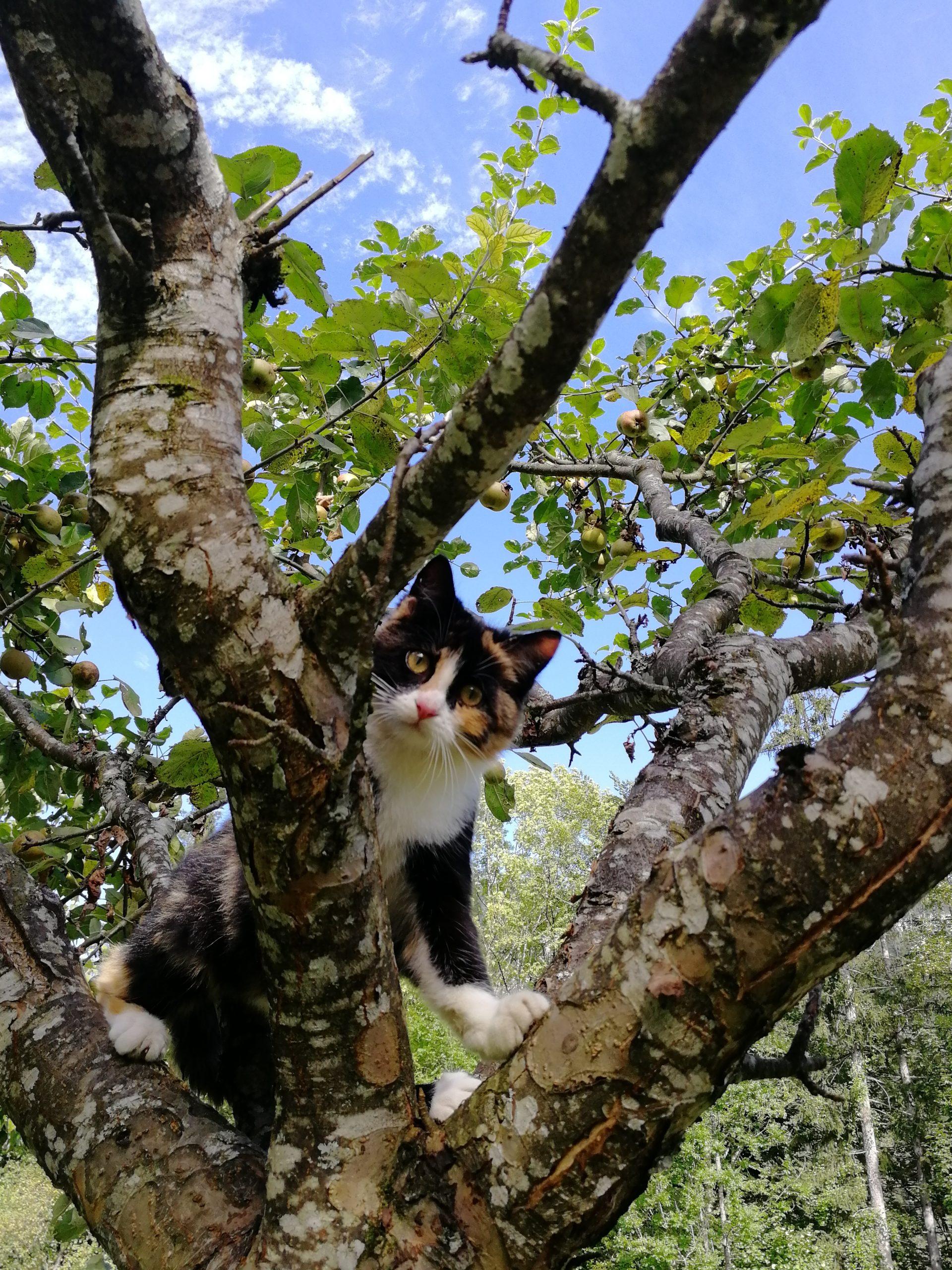 Krepper Lofer Katze Mimi