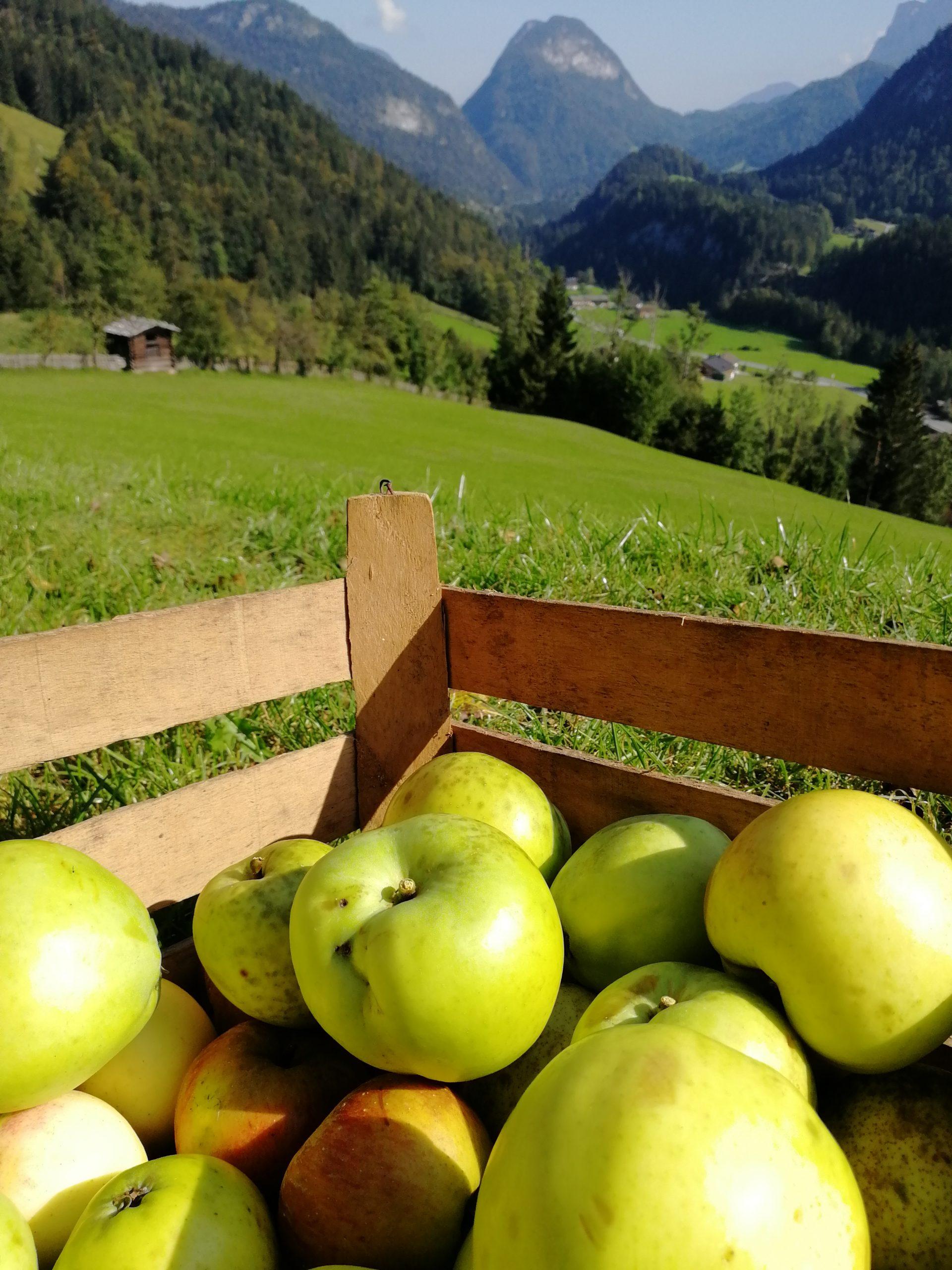 Krepper Lofer Apfelernte Restaurant