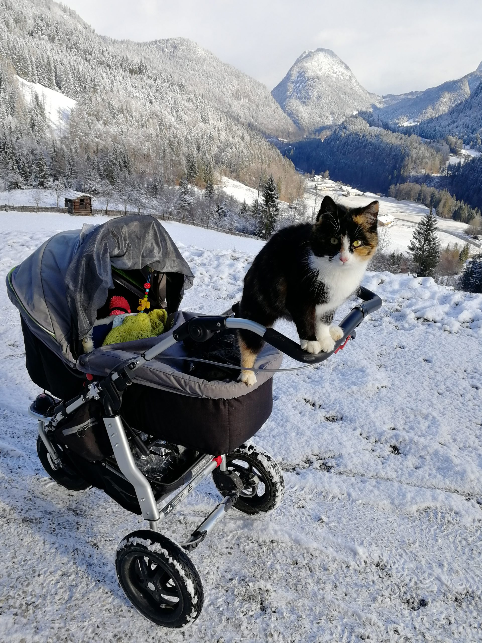 Krepper Lofer Restaurant Winter Cat