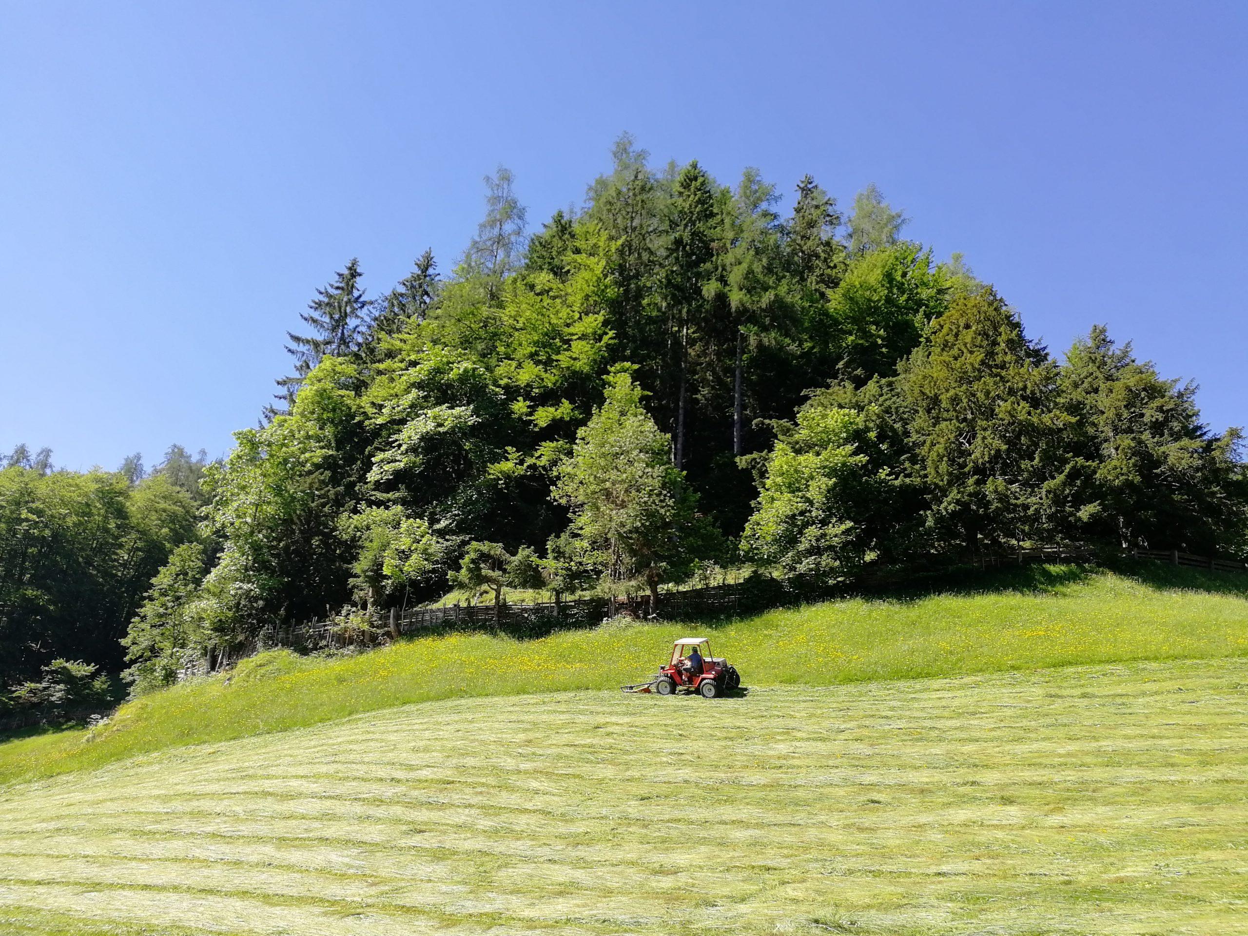 Krepper Lofer Hay Harvest